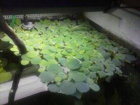 Lots de plantes flottantes