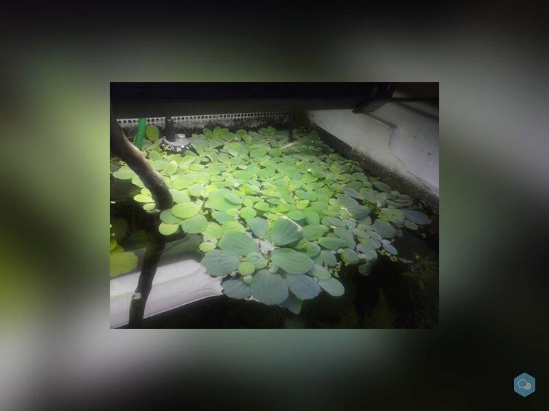 Lots de plantes flottantes 1