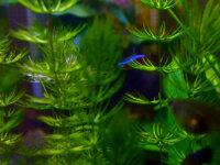 Lots de plantes flottantes 3