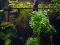 Lots de plantes flottantes 4