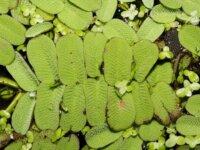 Lots de plantes flottantes 5