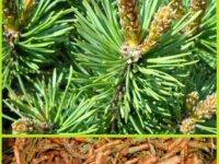 Продаю травы - очищение, защита, восстановление ау 1