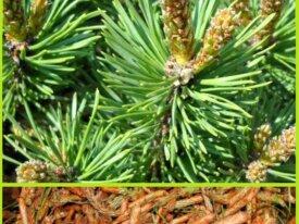 Продаю травы - очищение, защита, восстановление ау