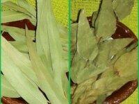 Продаю травы - очищение, защита, восстановление ау 3