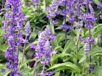 Продаю травы - очищение, защита, восстановление ау 5