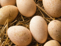 Яйца для инкубации (тестовое объявление) 1