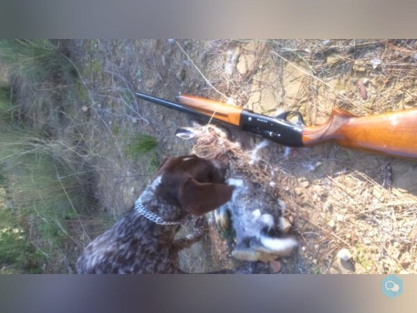 Pack Chasse (hunting pack) - img
