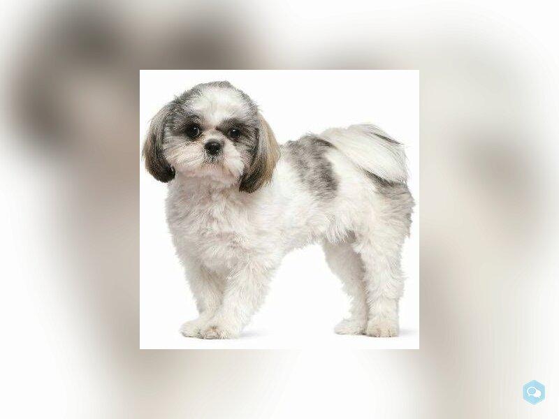 Продам собаку 2