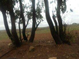Terrain 2 hectares à El Jadida Doukkala