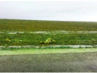 Terrain de 2 hectares à Oulad Freuj Doukkala 1