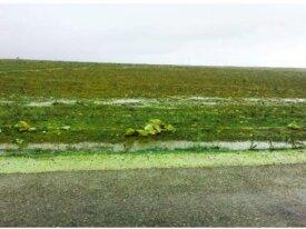 Terrain de 2 hectares à Oulad Freuj Doukkala