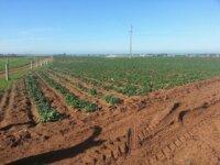 Ferme de 80 hectares à Azemmour 1