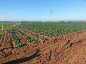 Ferme de 80 hectares à Azemmour