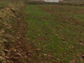 Terrain titré de 5000 m² à région El Jadida