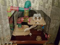 Vend cage pour Hamster  (Nice 06100) 1