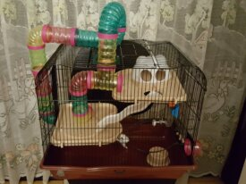 Vend cage pour Hamster  (Nice 06100)