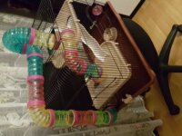 Vend cage pour Hamster  (Nice 06100) 2