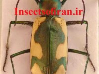 Insects of Iran 1