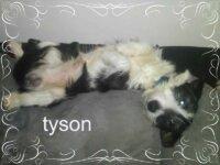 [Les toutous de la secondes chance] Tyson 1