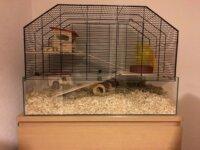 Cage pour hamster nain, souris, etc 1