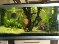 Aquarium 640L 2