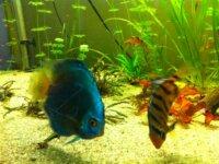 Aquarium 640L 4