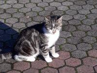 chaton érrant 1