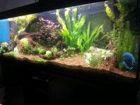 Aquarium 600 litres 1