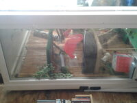 Vends grand terrarium L 160 x l 90 x h 240 6