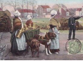 Laitières Belges arrêtées  1907
