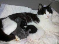 Regalo 3 gattini  2