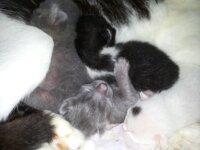 Regalo 3 gattini  3