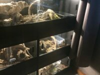 [VENDS] Divers Terrariums 1