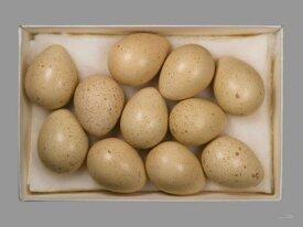 Яйцо куропатки запись