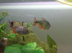 peixes varios - venda ou torca