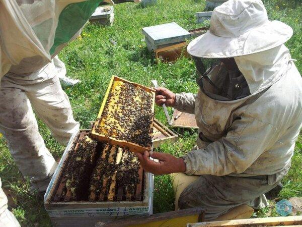 مناحل طيبة لإنتاج عسل النحل - img