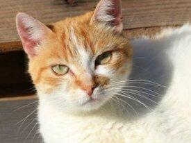 Feline a12521