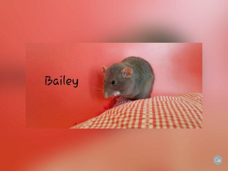 Bailey 1