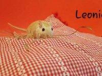 Leonie 1
