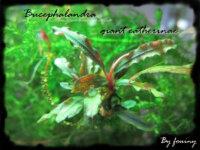 [87+envoi] Diverses plantes d'aquarium d'eau douce 1