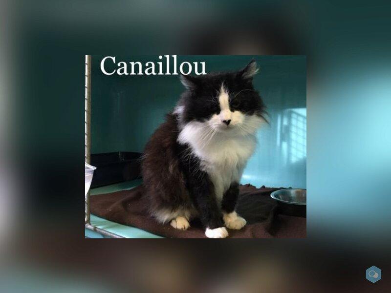 Canaillou 1
