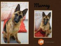 Murray 1