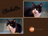 Clochette 1
