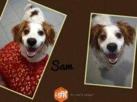 Sam 1