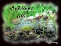 [87+ envoi] Divers crevettes d'eau douce 4
