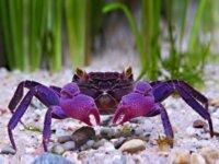 Recherche crabes vampires 1