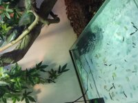 Terrarium sur mesure 1m20x1m50 5