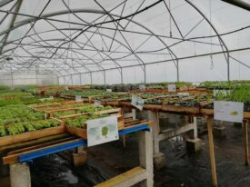 Plants maraîchers