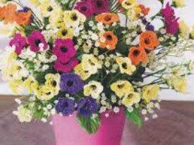 Magnifiques Bouquets de Fleurs du Printemps