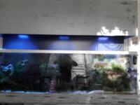 Aquarium eau de mer 600 l équipé en service 1